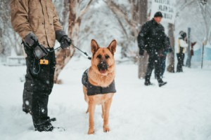 canine police officer who won federal overtime lawsuit